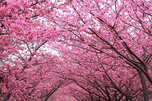 【家在一周年】有一种意境叫做:春天这么美,我想去看看