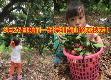 【活动来袭】6月26日我们一起到深圳南山摘荔枝去!火热报名中